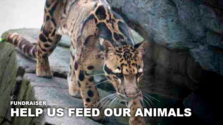 Help us feed our animals